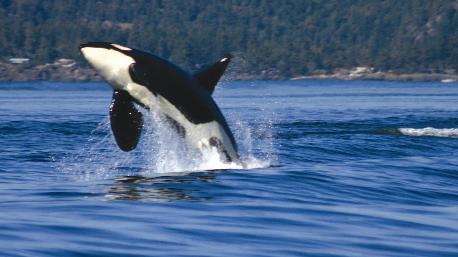Things to Do in Richmond BC - Whale Watching